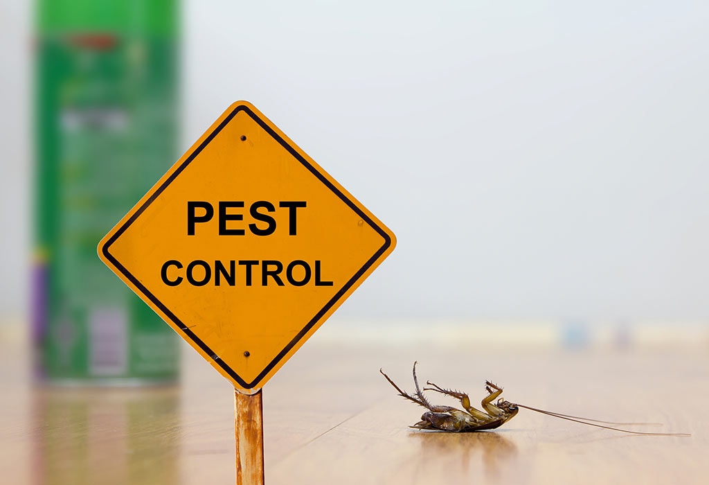 Pest Removal Company